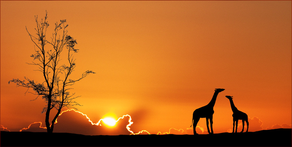 17 SUNSET SILHOUETTES by Carole Lewis