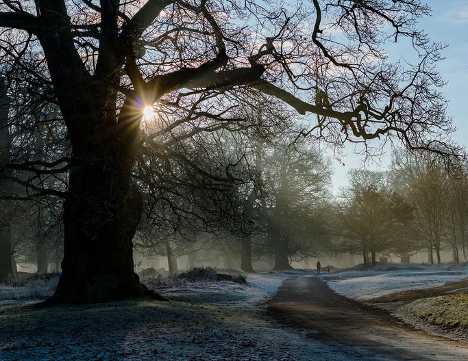 17 EARLY MORNING WALKIES  by Steve Oakes