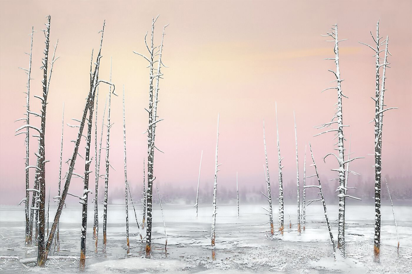 16 SKELETAL TREES YELLOWSTONE by Pam Sherren