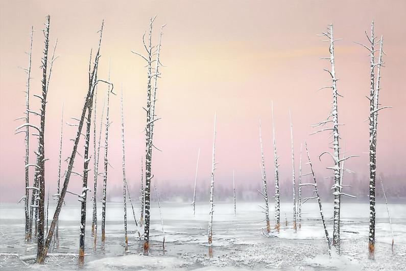 16 SKELETAL TREES YELLOWSTONE by Pam Sherren