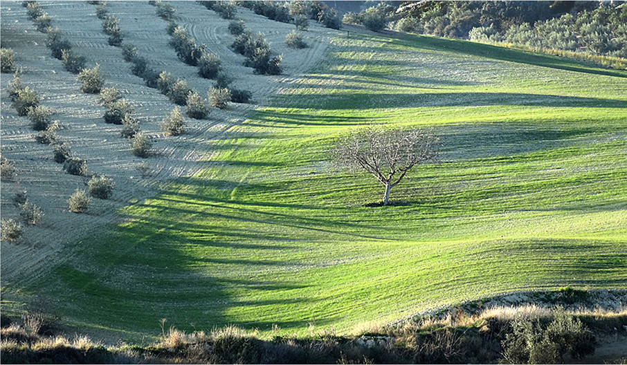 17 WINTER LANDSCAPE (SPAIN) by Brian Whiston