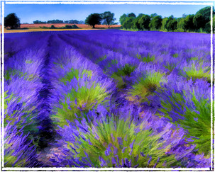 17 FRAGRANT LAVENDER by Mick Dudley