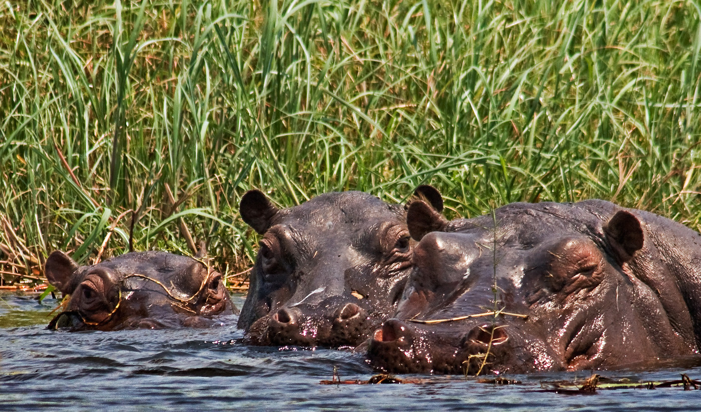 16 HIPPO POD by Peter Tulloch