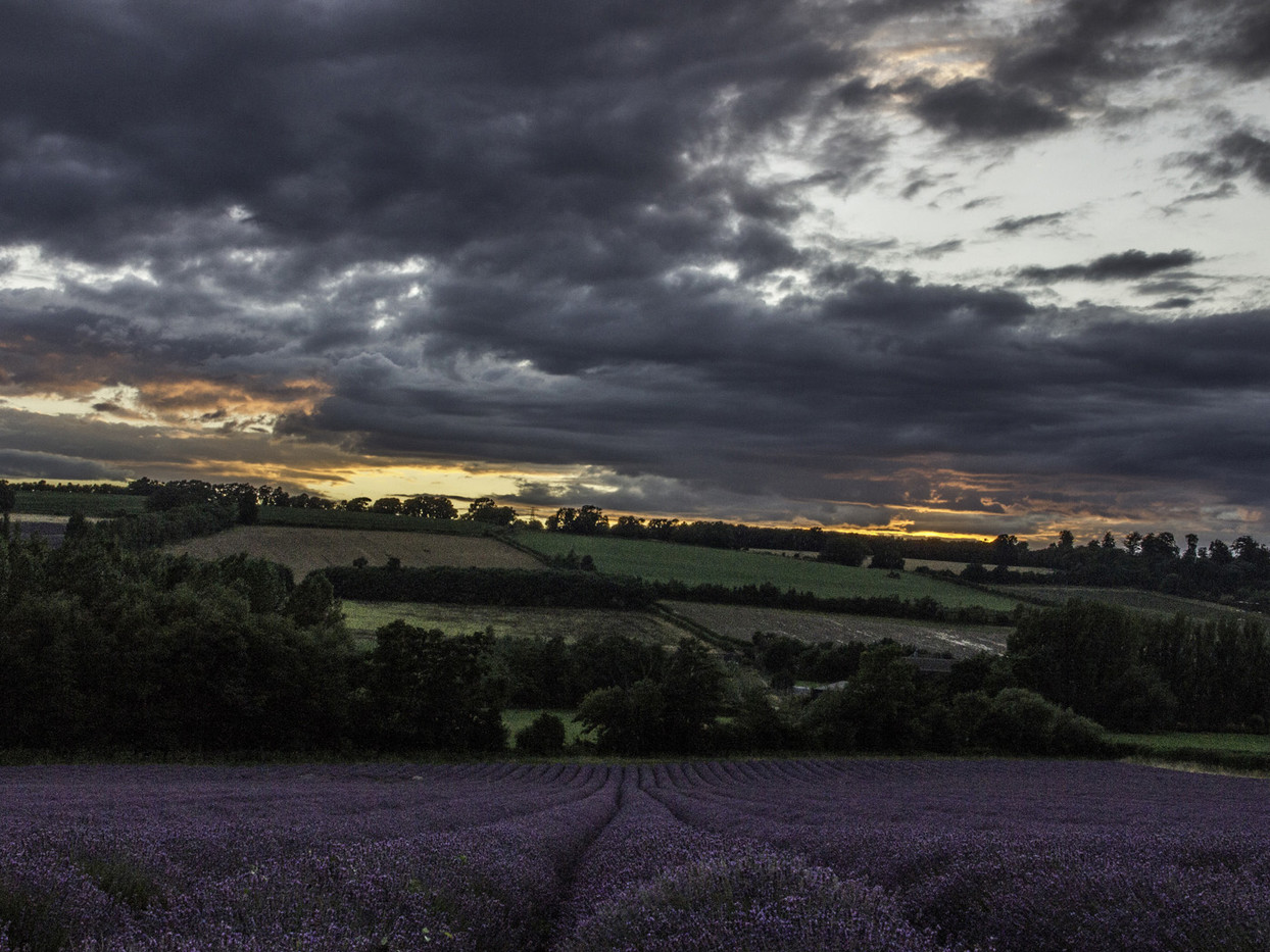 GROUP 1 17 SUNSET OVER THE LAVENDER by Colin Smith