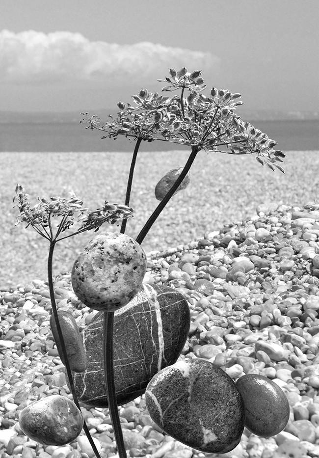 Group 1 15 ON THE BEACH by Jenny Clark