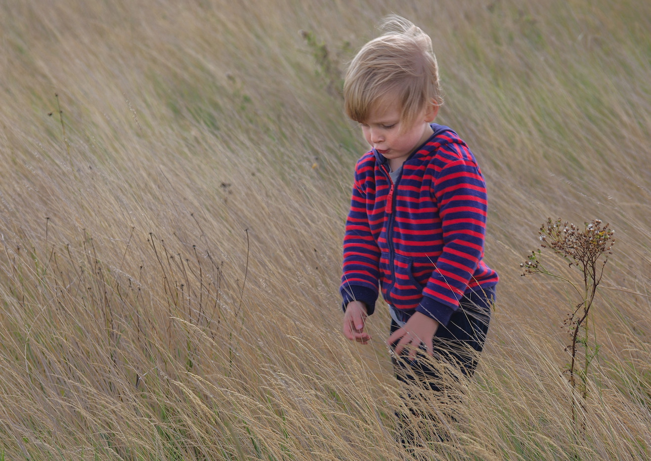20 PLAYING IN THE GRASS by John Lewis