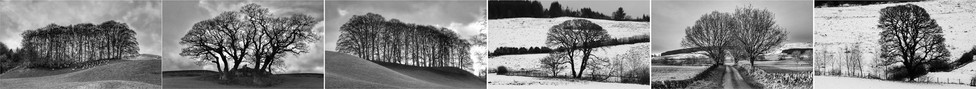 16 DUMFRIES AND GALLOWAY TREES by Dave Brooker