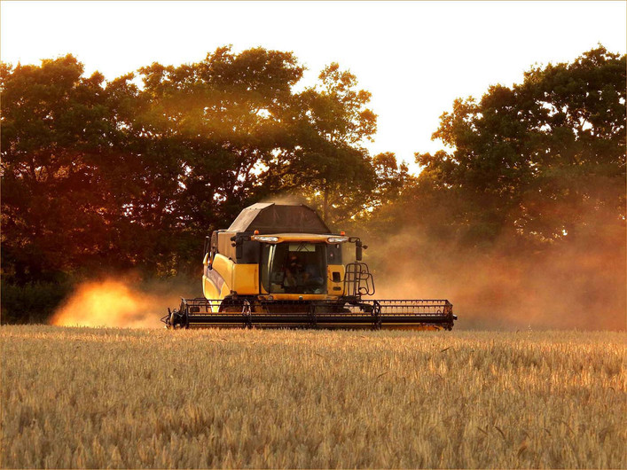 16 COMBINING AT SUNSET by Dorril Polley