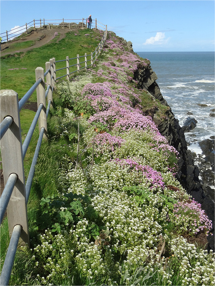 16 WILD FLOWERS HARTLAND QUAY by Brian Whiston