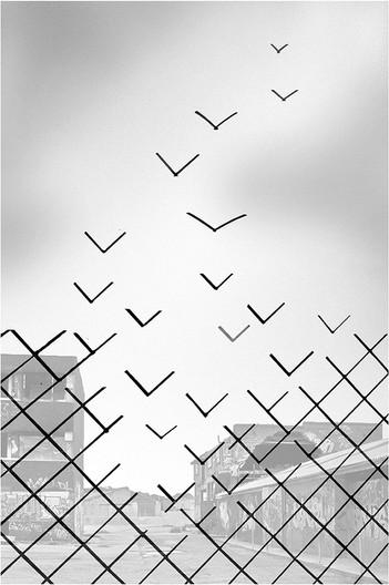 16 BREAK FOR FREEDOM by Jenny Clark