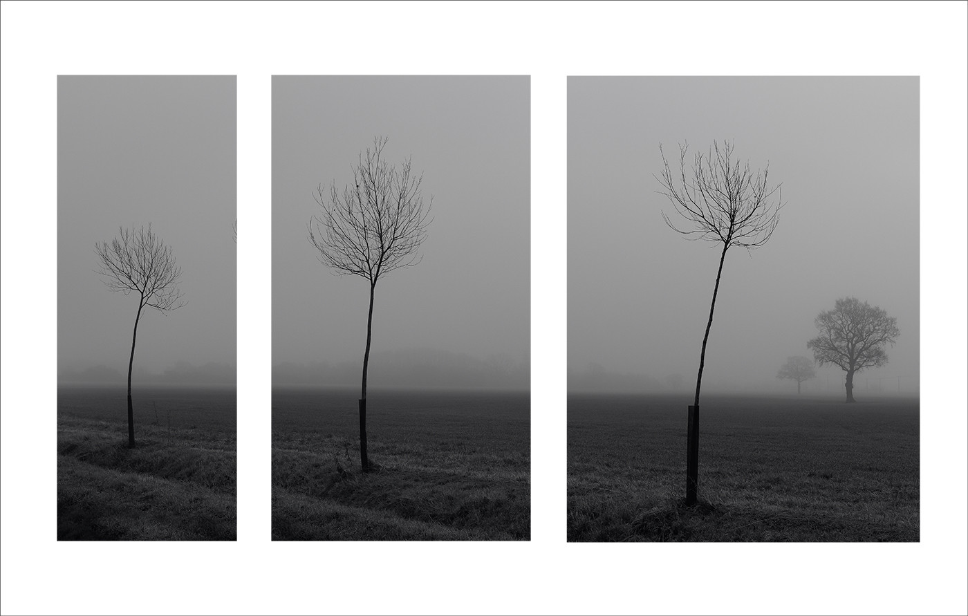 TREES IN THE MIST by Colin Hurley