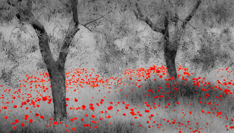 16 POPPED POPPIES by Peter Tulloch