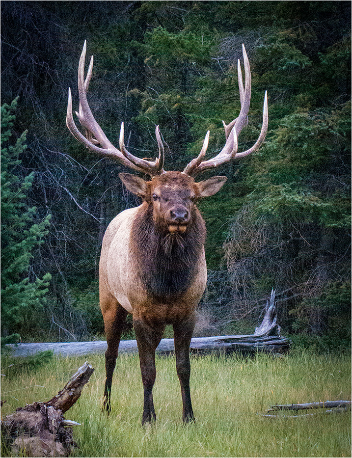 16 ELK by Cathie Agates