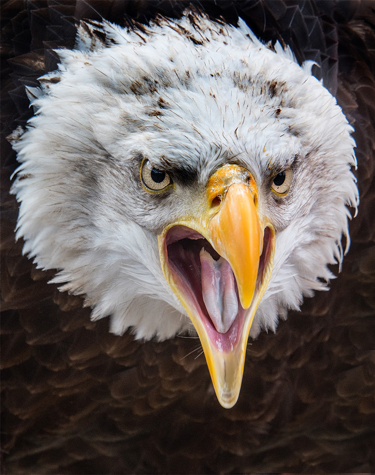 20 ANGRY BIRD by John Butler