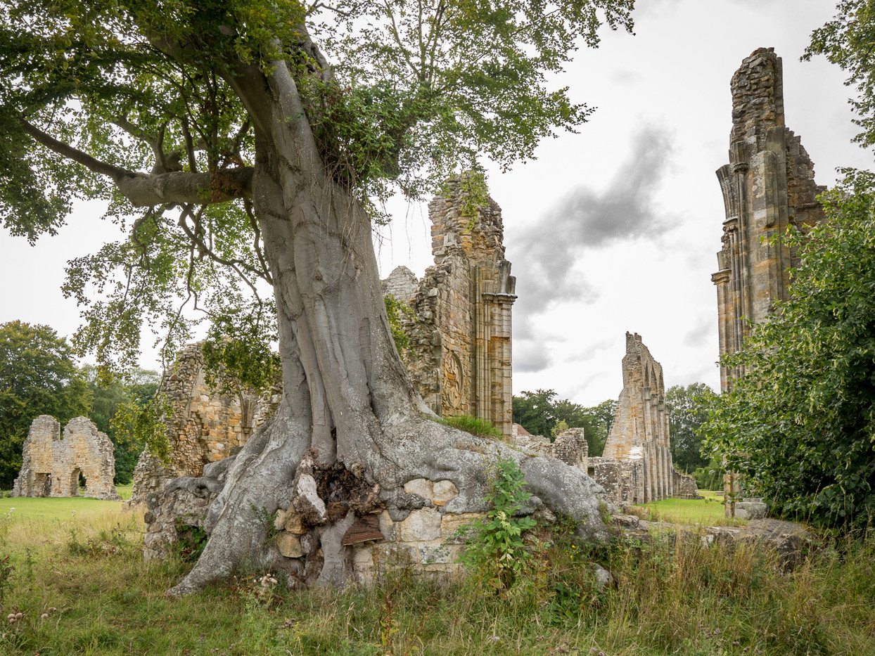 17 BAYHAM ABBEY RUINS by Roger Wates