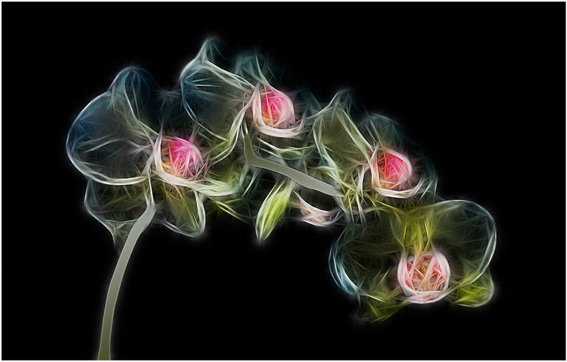 17 ORCHID CYMBIDIUM by Brian Barkley