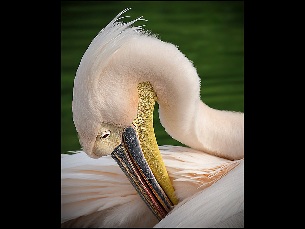 Group 1 20 PELICAN by Mick Dudley