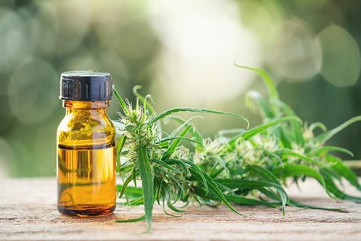 cannabis-with-cannabidiol-cbd-extract-in