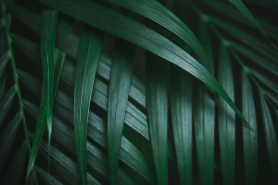 deep-dark-green-palm-leaves-pattern-C2XJ