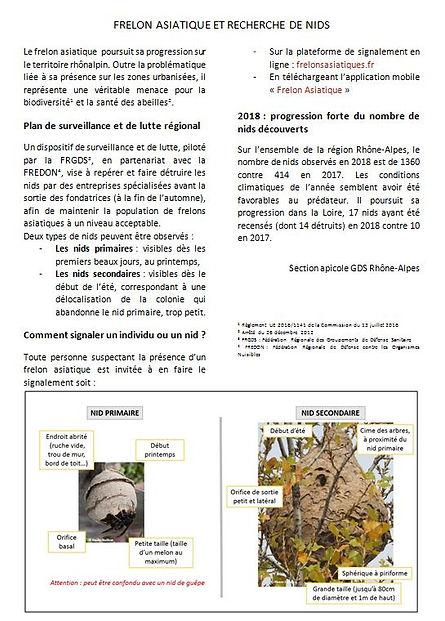 Frelons 4.JPG
