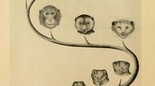 L'évolution et genèse du visage de l'homme