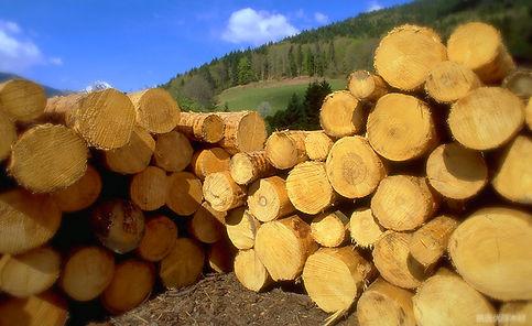 Резонансная древесина