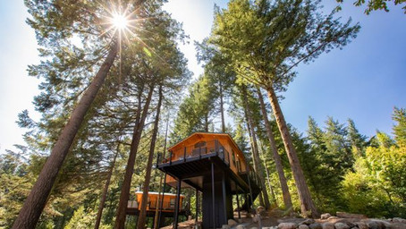Columbia River Gorge's Go-to Lodge Unveils Its Highest Treehouses to Date
