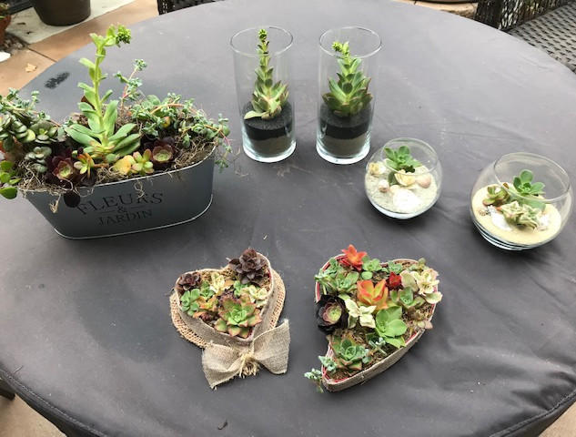 More succulents!