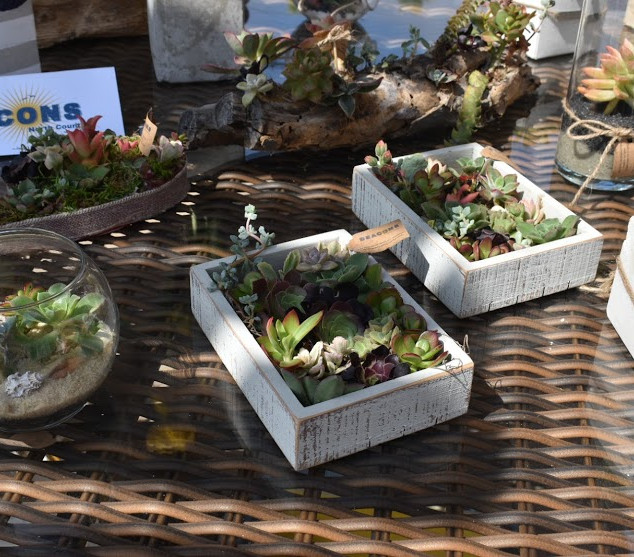 Succulents made by Beacons trainees