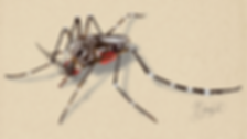 Mosquito-01_edited_edited.png