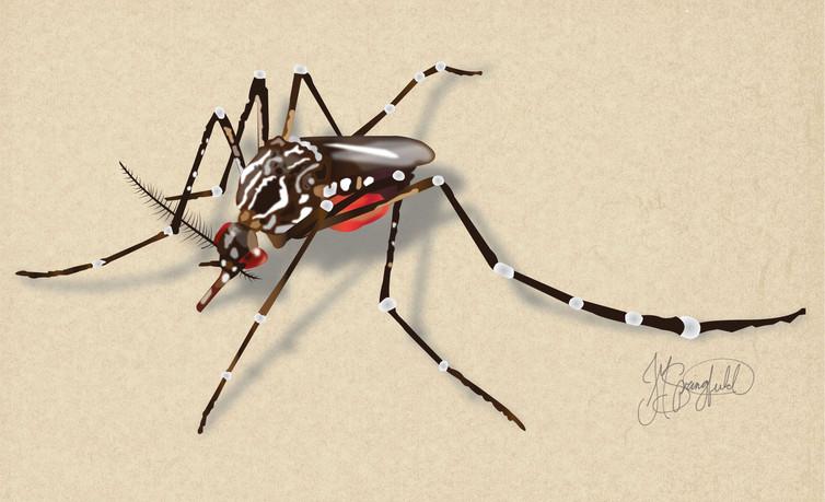Mosquito-01.jpg