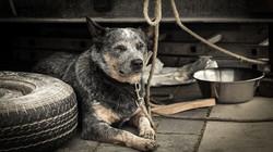dog-1426490__480