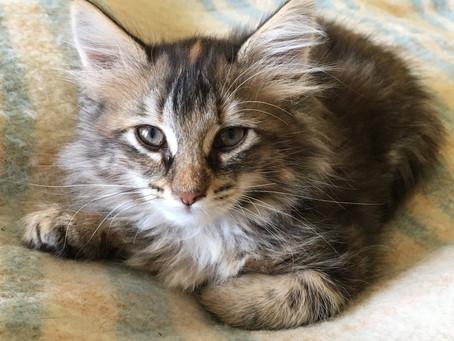 5 chatons bientôt adoptables