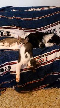 Oscar & Misty