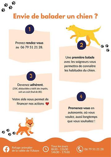 Envie de balader un chien  (1).jpg