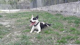 Condition chien 2.jpg