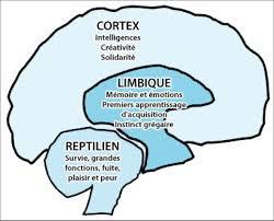 Le Coaching Limbic ou...  comment donner un Coup de pouce à votre cerveau