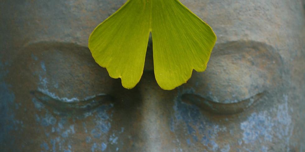 L'effet Papillon: Méditation guidée & Coaching