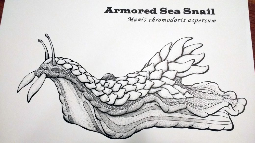 Armored Sea Snail