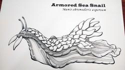 Armored Sea Snail