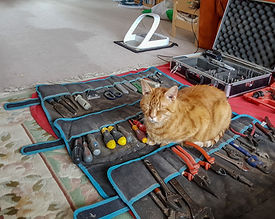 Gingy guarding Cat sitter Phil's tools