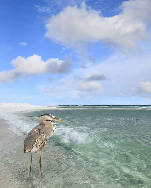 a heron stands in shallow waters
