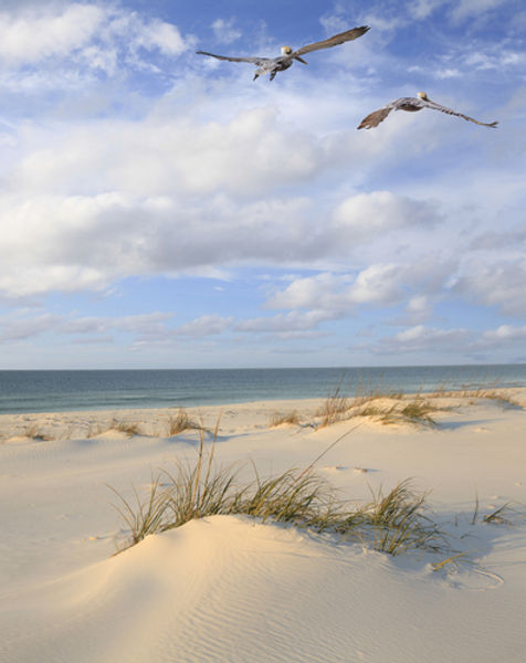 pelicans fly over white sand beach