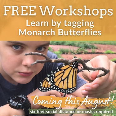2021 Free Monarch Tagging Workshops at P
