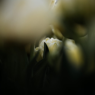 2021'05'02 tulpen-323.jpg