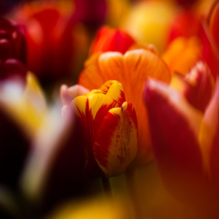 2021'05'02 tulpen-125.jpg