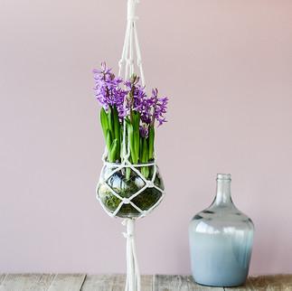 Paarse Hyacint