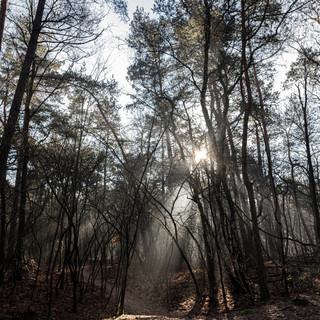 Natuurfotografie zonnestralen