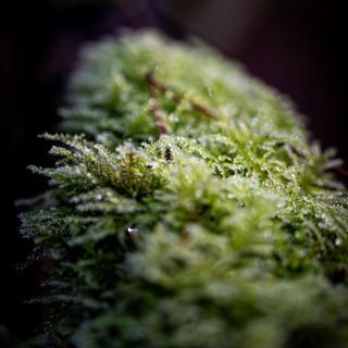 Natuurfotografie macrofoto mos