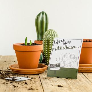 Cactus zaden. Je eigen cactus groeien.